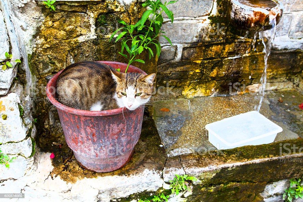 Cat in the flower pot foto de stock royalty-free