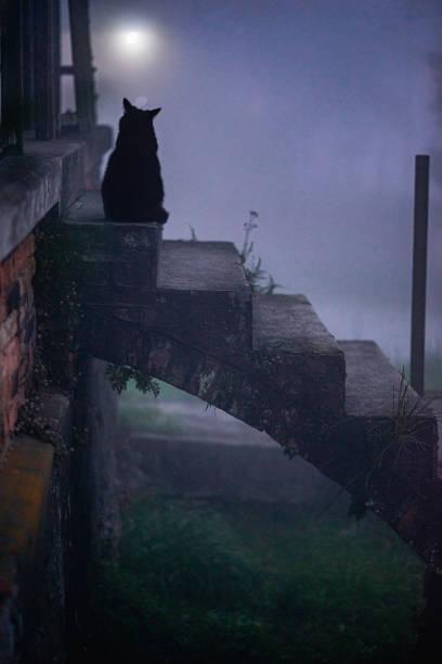 Cat in the fog picture id1255562699?b=1&k=6&m=1255562699&s=612x612&w=0&h=hwkuyros6oxixeyzy 3f0y0xrisrvfkar6fcx4jikbs=