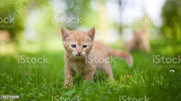 Cat in the garden picture id502118548?b=1&k=6&m=502118548&s=612x612&h= uhhq6jitp3i hoxj6ip9ipb0yxlsmxi 5lejcowj3a=