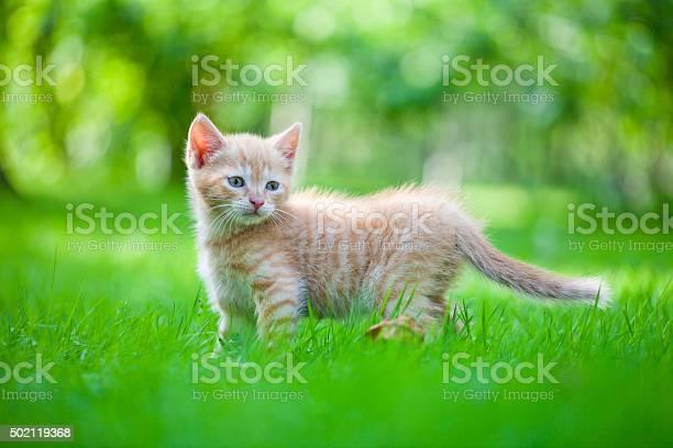 Cat in the garden picture id502119368?b=1&k=6&m=502119368&s=612x612&h=2pldxcnhgjkc yj0azc6nwc4rnafacjhwdygecfj uy=