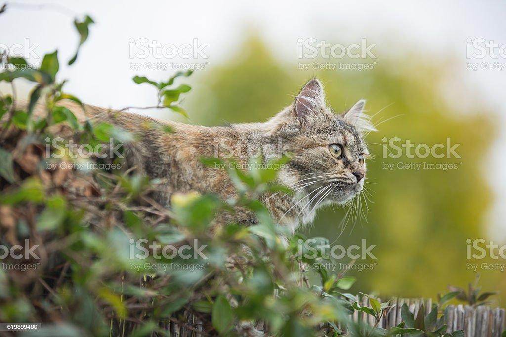 Cat en el jardín  - foto de stock