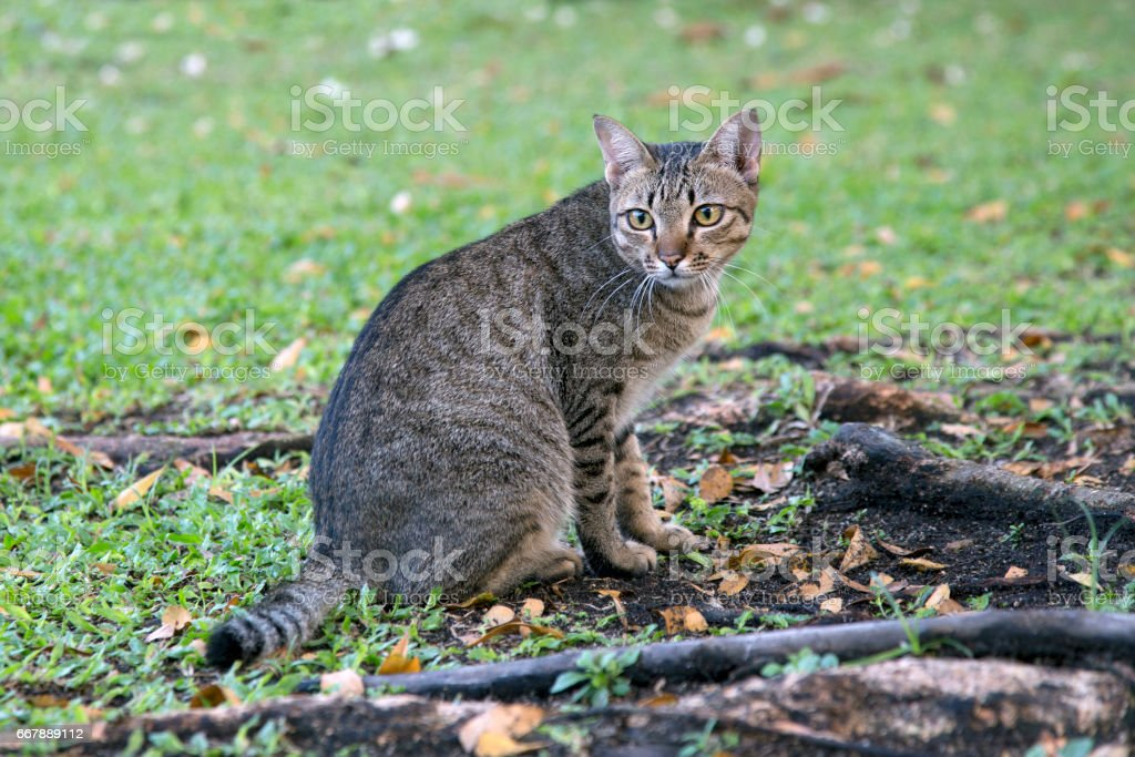cat in the garden royalty-free stock photo
