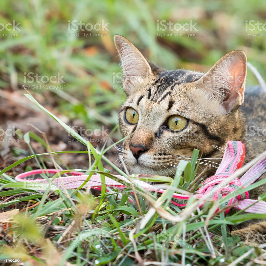 Cat In The Grass Hollow Stock Photo