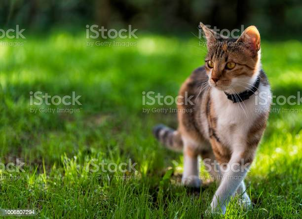 Cat in the grass picture id1006807294?b=1&k=6&m=1006807294&s=612x612&h=kuzzx0oudcchhx1hpzfd ea2hey4rpalpueccnjokvu=