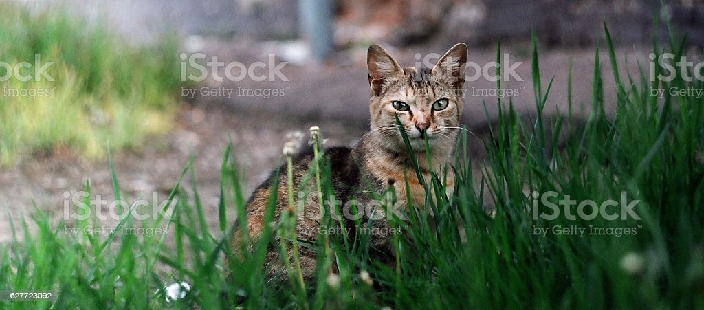 Cat in the grass stock photo