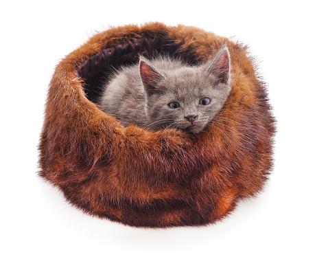 Cat in the hat.