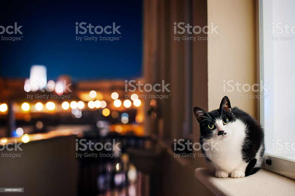 Cat in the night stock photo