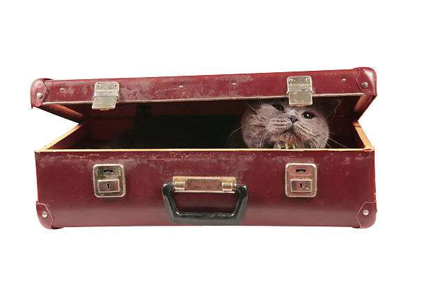 Cat in the old vintage suitcase picture id536029683?b=1&k=6&m=536029683&s=612x612&w=0&h=6a7q fse39ewktck2v1byzeqiua u4oxoxz hjjkjos=