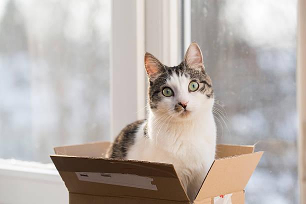 Cat in the postal box picture id505796768?b=1&k=6&m=505796768&s=612x612&w=0&h=kyk9xj4xzhmotupt1uspez8t4auzwjt3ffbci67c8 u=