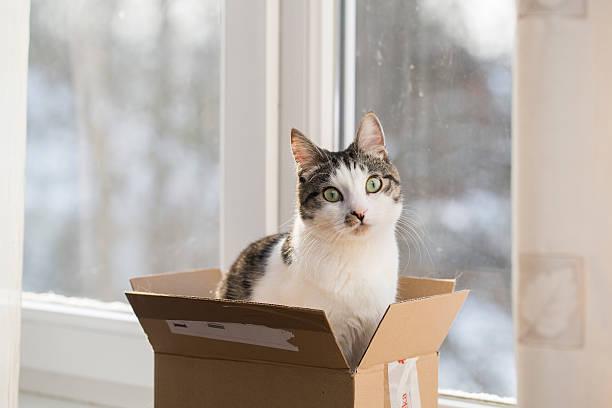 Cat in the postal box picture id505796810?b=1&k=6&m=505796810&s=612x612&w=0&h=c9fbpce5dqvswunufwssxhdl5ltaa5apxucpstxdetw=