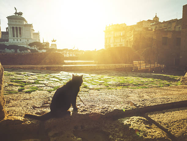 Cat in the roman forum picture id517619571?b=1&k=6&m=517619571&s=612x612&w=0&h=jnndkofl3pg1t0k0kl0w4cejebczrilrvfhfmamchoa=