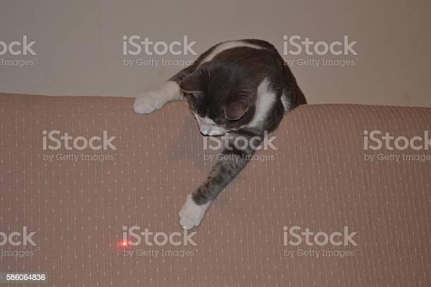 Cat in the room picture id586064836?b=1&k=6&m=586064836&s=612x612&h=xj9a5nwwb ygrfs wi8acuhni76hbkektl0 uthcmvc=