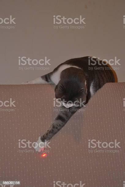 Cat in the room picture id586065158?b=1&k=6&m=586065158&s=612x612&h=oktvtipjyfl69ywlhtrko4r1nqi 95dmhvcr0vpn1m4=