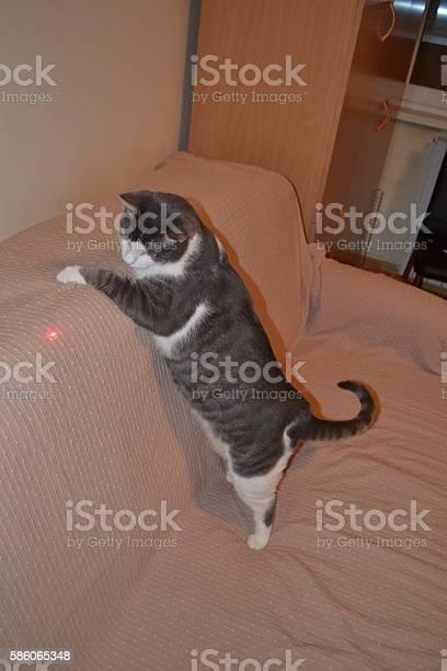 Cat in the room picture id586065348?b=1&k=6&m=586065348&s=612x612&h=jiofie5rabtbshggv3ajw6x8ni4nwbllc1co2r7c1iq=