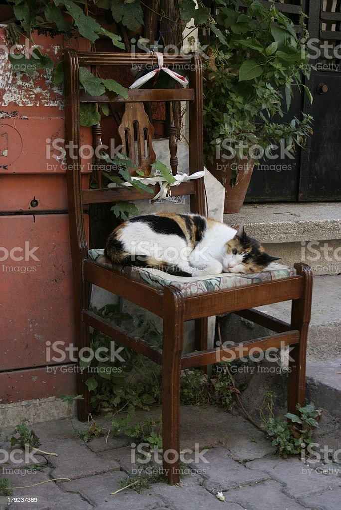 Cat in the street Istanbul royalty-free stock photo