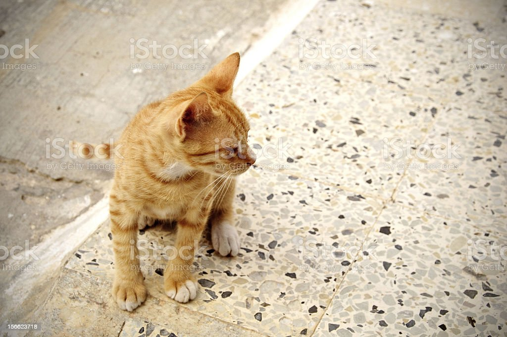 Cat in the streets royalty-free stock photo