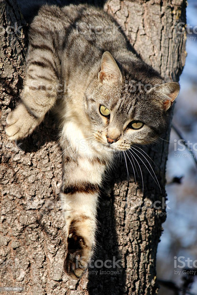 Cat in the Tree royalty-free stock photo