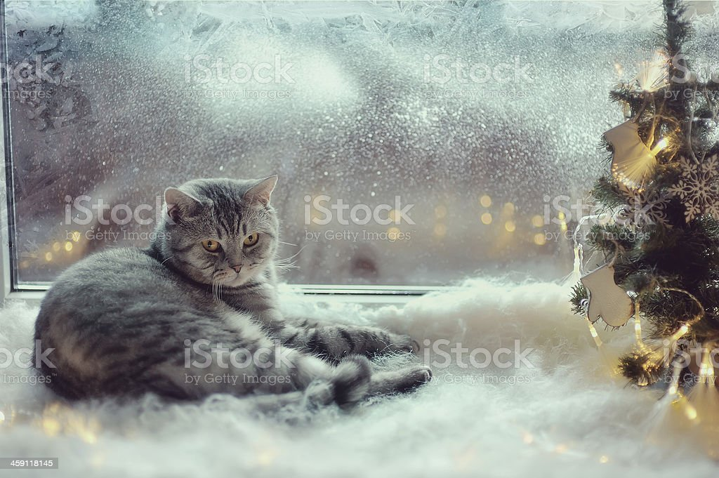 Cat in the winter window stock photo