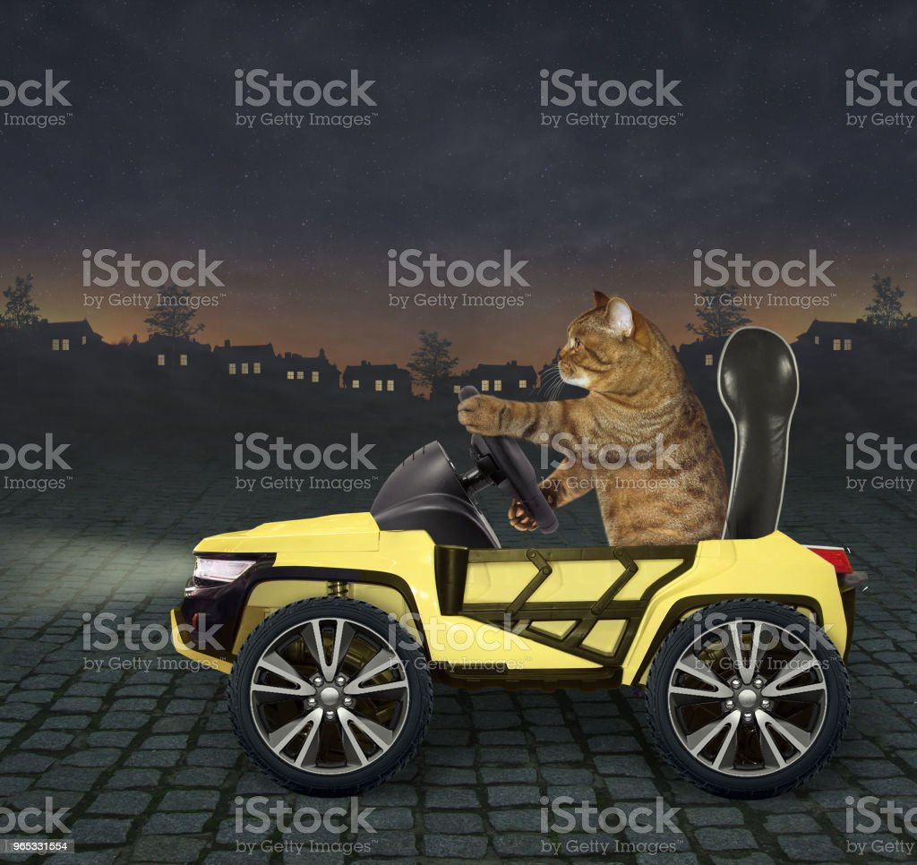 Cat in the yellow car 2 zbiór zdjęć royalty-free