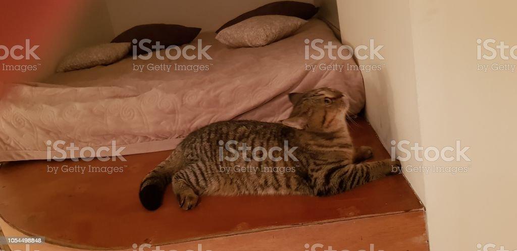 Cat in travel стоковое фото