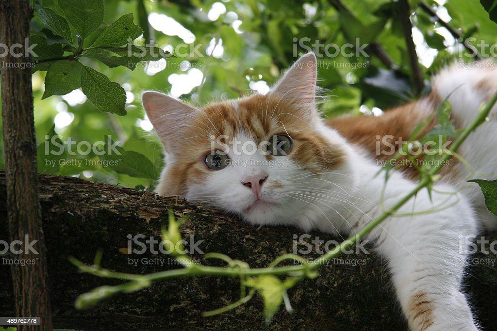 Cat in Tree stock photo