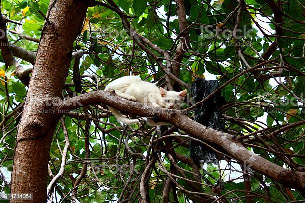 Cat in tree picture id614714054?b=1&k=6&m=614714054&s=612x612&h=lxln4bqhhkydmwvwcb47gu9zfdqrf1qadyvzkll7a6o=