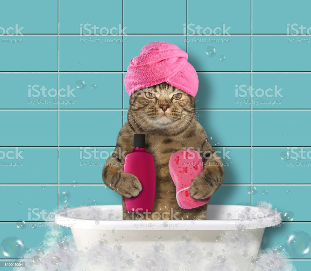 Cat in turban 2 stock photo