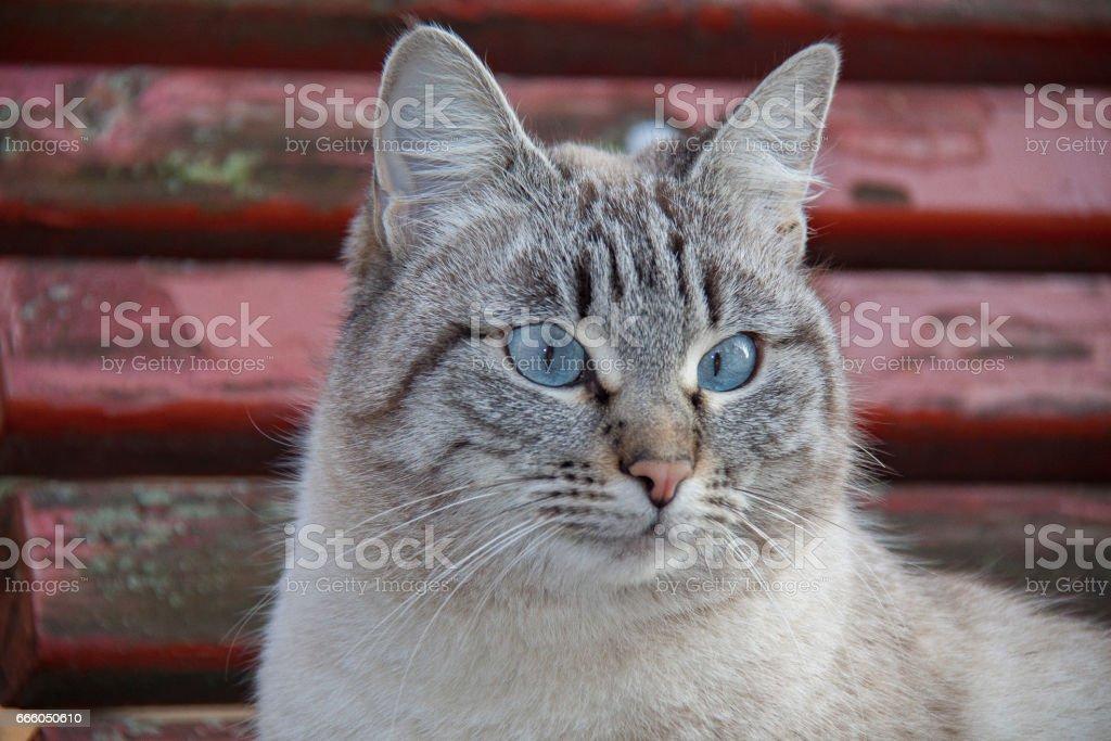 Cat in Venice стоковое фото