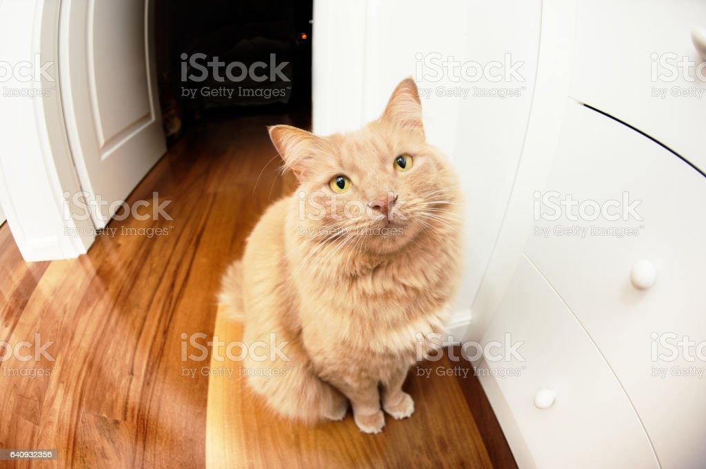 Gato em posição de espera - foto de acervo
