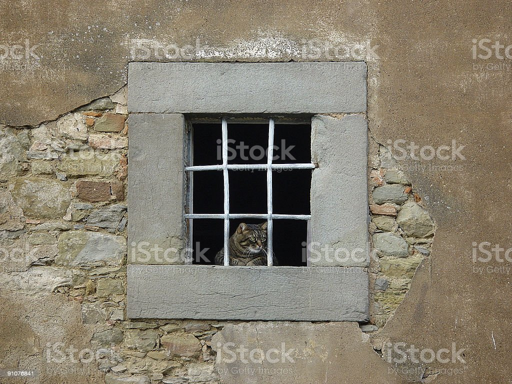 Cat in window royalty-free stock photo