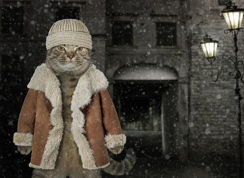 Cat in winter coat 3