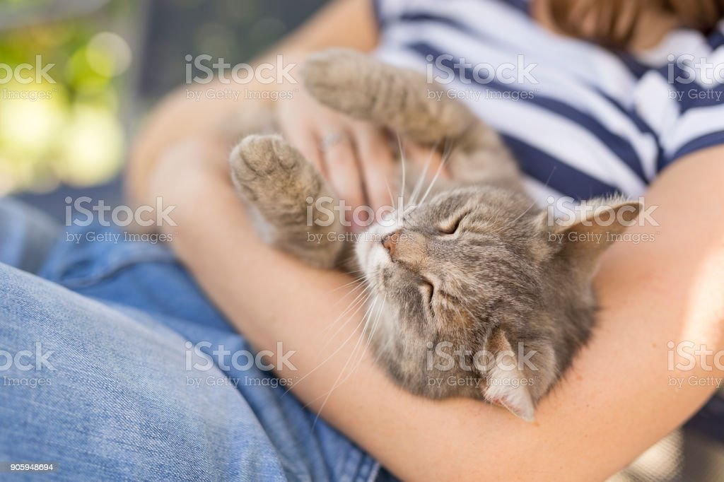 Cat in woman's lap stock photo