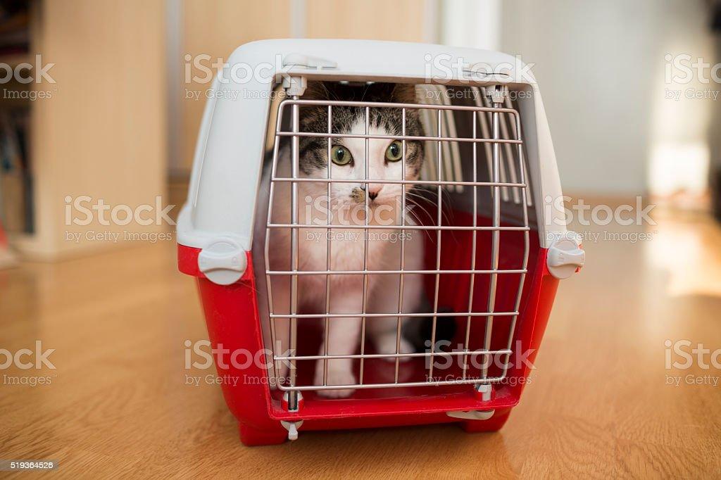 cat inside a cat carrier box stock photo