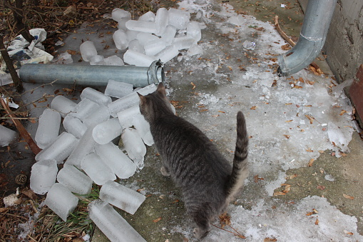 Above view on broken rain gutter on the ground with ice round blocks, inspected by a street cat