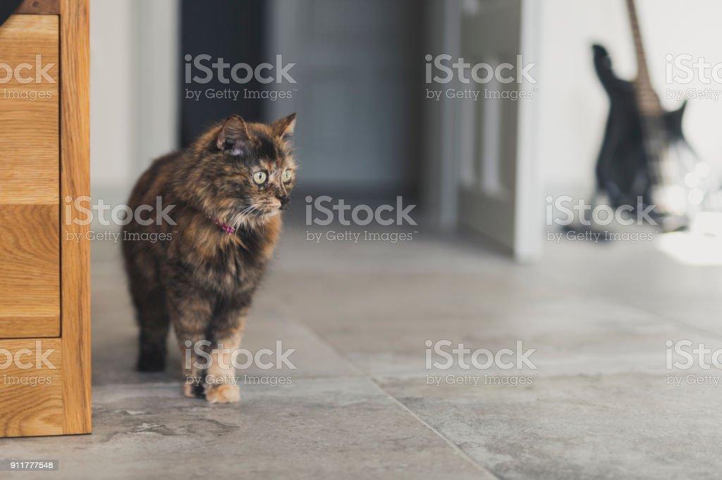 Katze untersuchen – Foto