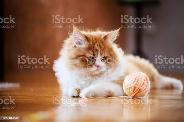 Cat is curious picture id669403816?b=1&k=6&m=669403816&s=612x612&h=bs2dhjkobcjebks3vdnsi5vqvp8 k0u dvsezxmeyf0=