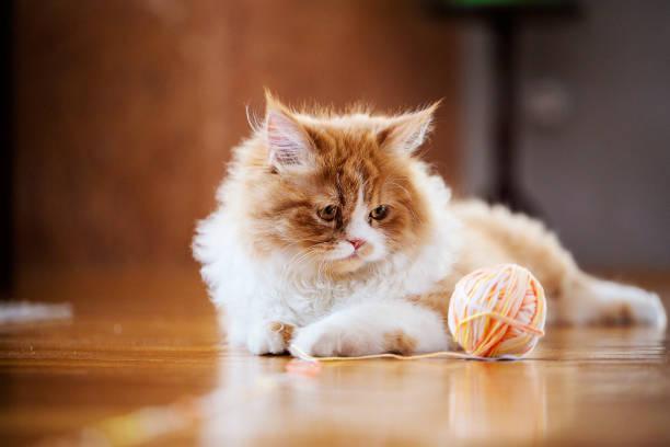 Cat is curious picture id669403816?b=1&k=6&m=669403816&s=612x612&w=0&h=rto3gbj3jjm7loczs vxuny8jpxnvpz8cvfebyednn4=