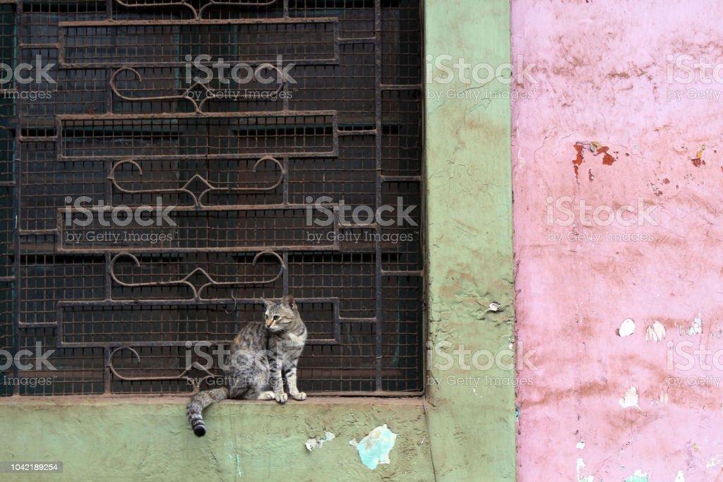 Un gato no hace nada alrededor de la puerta en el casco antiguo de Goa. - foto de stock