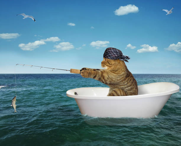 Cat is fishing on the bathtub stock photo