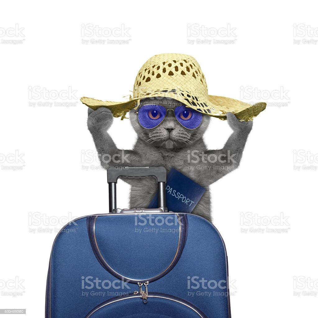 cat is going on a trip to travel with suitcase stock photo