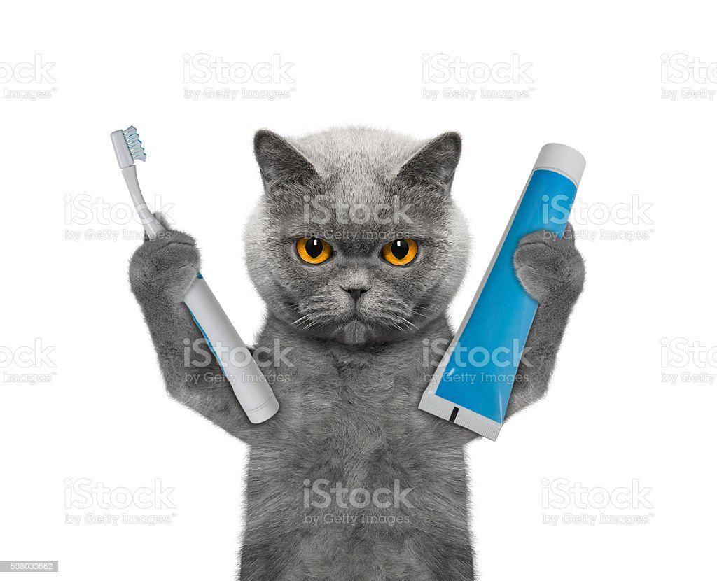 cat is going to clean the teeth stock photo