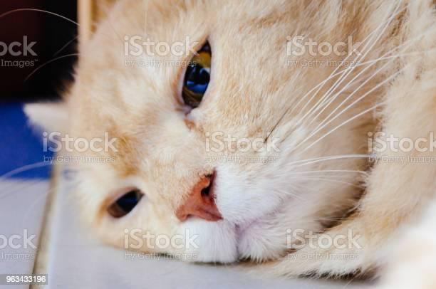 Kot Będzie Spać - zdjęcia stockowe i więcej obrazów Białe tło