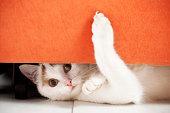 Cat is hiding