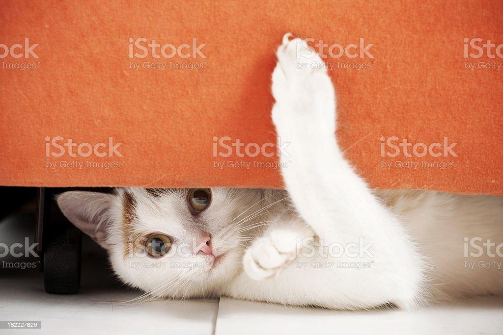 Cat is hiding stock photo
