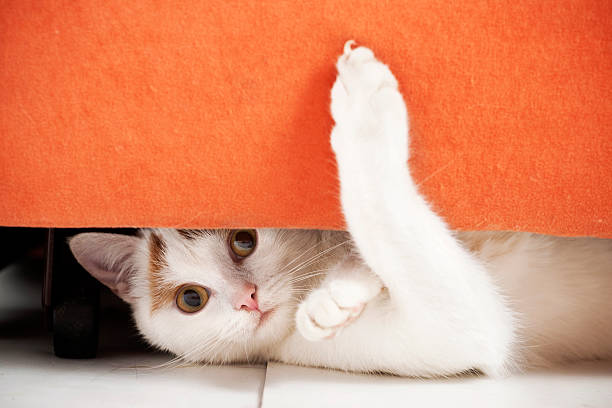 Cat is hiding Cat hiding under furniture.See more of my cats: claw stock pictures, royalty-free photos & images