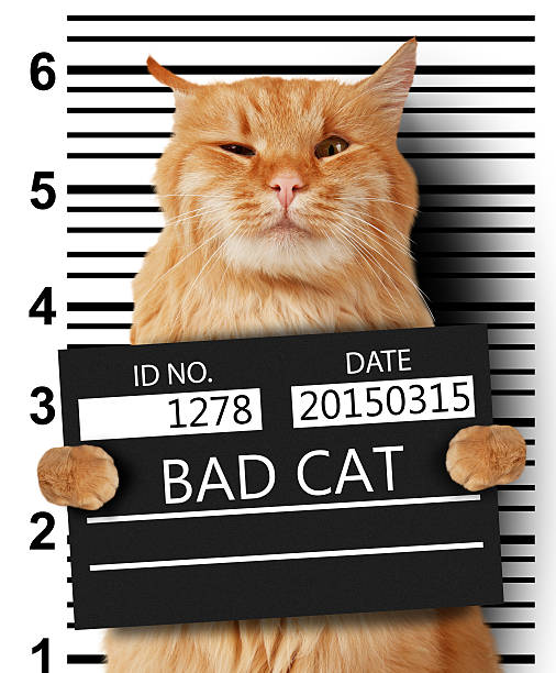 cat is holding a banner offender on white background. - schlechte laune sprüche stock-fotos und bilder