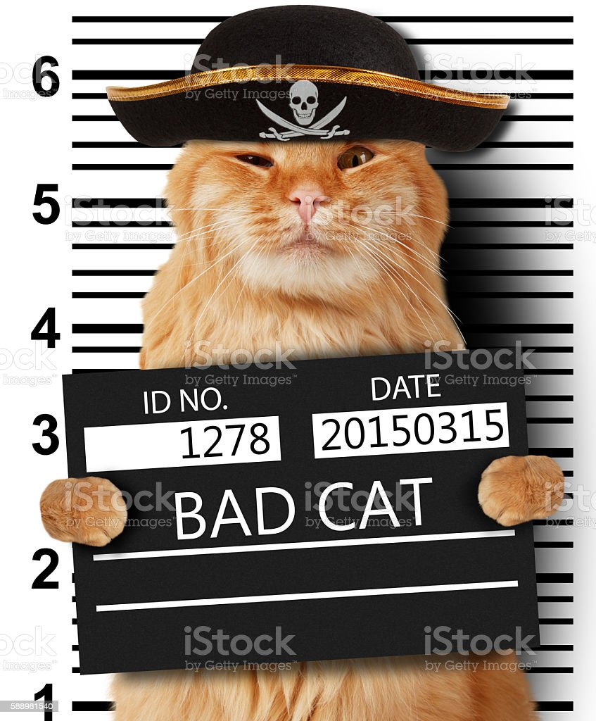 Cat is holding a banner offender on white background. stock photo
