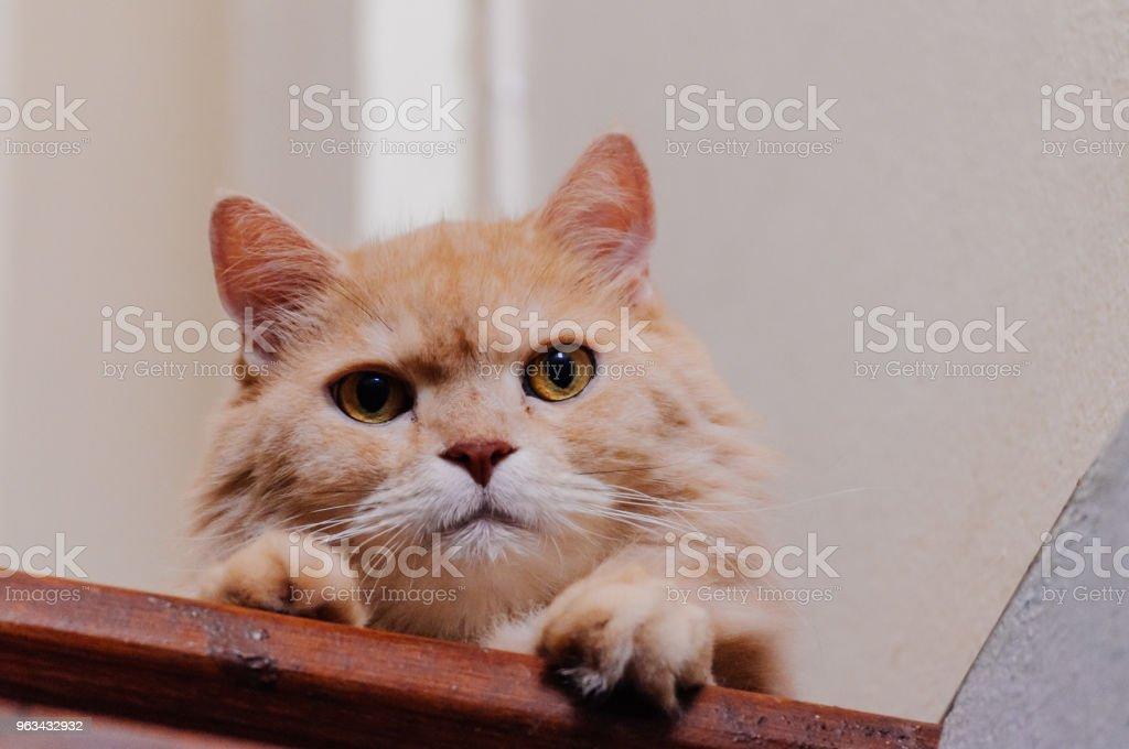 Chat cherche quelque chose, chat - Photo de Animaux de compagnie libre de droits