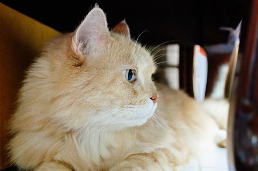 Cat Is Looking Something - zdjęcia stockowe i więcej obrazów Białe tło