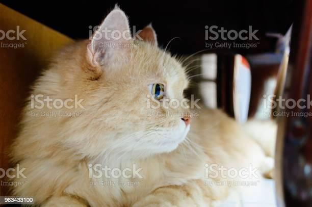 Kot Czegoś Szuka - zdjęcia stockowe i więcej obrazów Białe tło